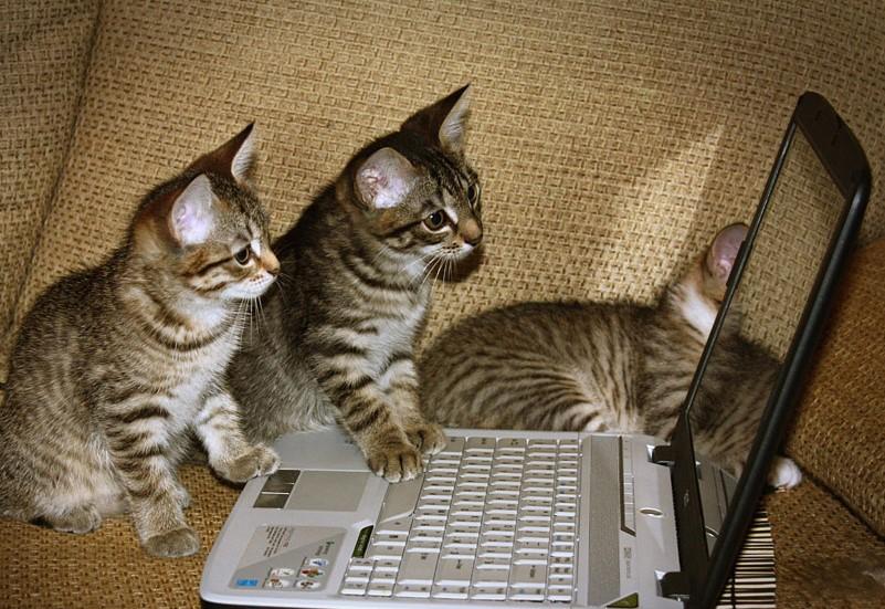 Нет, это не мои котики. Нет, их не трое!
